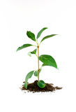 New plant growing Stock Photography