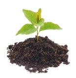 New plant Royalty Free Stock Photo