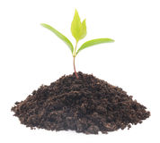 New plant Stock Image