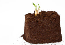New plant growth coming out Royalty Free Stock Photo