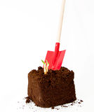 New plant growth coming out with a garden tool Stock Images