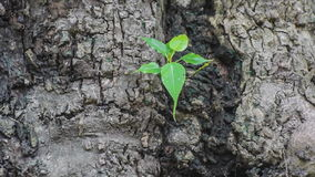 New plant growth on old tree stock video