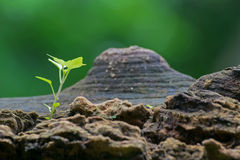 New plant growth on old tree trunk Stock Image