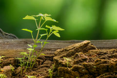New plant growth on old tree trunk Stock Images
