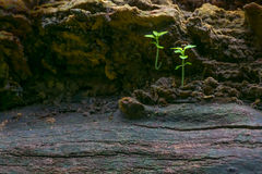 New plant growth on old tree trunk. Beautiful nature stock image. Moody dark background Royalty Free Stock Photo