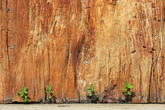 New Plant Growth survives between rock and a hard place Royalty Free Stock Images