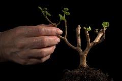 New plant, hand gesticular. Studio royalty free stock photo