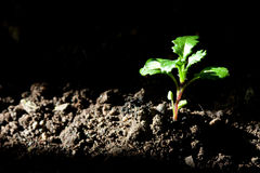 New plant life stock photography
