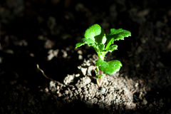 New plant life. Plant new life growth concept with sunburst royalty free stock photo