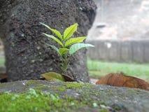 new plant royalty free stock photos