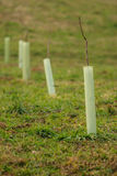 New plant protection Stock Photography