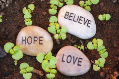 New Plant Shoots Bringing Belief, Hope and Love. Sprouting plants surround hope, love and believe message rocks royalty free stock photos