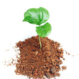 New plant w clipping path Stock Photography