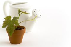New plant and watering-can Royalty Free Stock Photography
