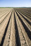 New planted field in spring. Rows of newly planted crops in a field in spring Stock Photography