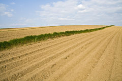 New planted field in spring. Rows of newly planted crops in a field in spring royalty free stock photo