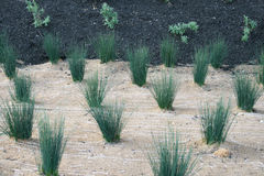 New plantings Stock Images