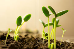 New plants. Green sprout growing from soil Stock Photography