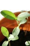 New Plants Stock Image