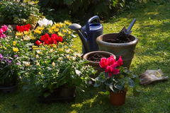 New plants in flowerpots for autumn garden Royalty Free Stock Images
