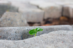 New plants, new life, of Power nature Stock Photography