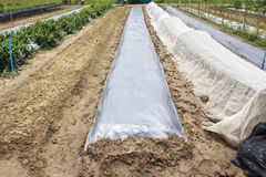 New plastic sheeting weed barrier in garden Stock Images