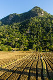 New ploughed fielding front of a mountain. New ploughed fielding front of a mountain in Thailand Royalty Free Stock Photo