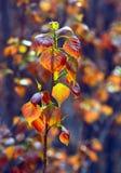 New poplar leaf Stock Photo
