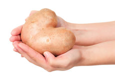 New potato Royalty Free Stock Image