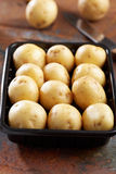New potato in a container Stock Photography