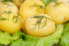 New potato  and green  salad Royalty Free Stock Photo