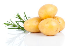 New potato. With rosemary, isolated on white background Royalty Free Stock Photos