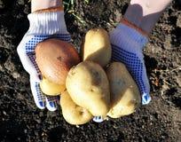 New potatoes Royalty Free Stock Photos