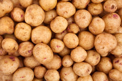 New potatoes Royalty Free Stock Images