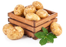 New potatoes in box with green leaves Stock Photo