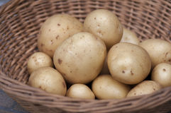 New potatoes Casablanca. Casablanca new potatoes in basket Royalty Free Stock Photography