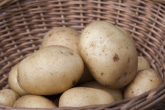 New potatoes Casablanca. Casablanca new potatoes in basket with space for copy above Stock Photo