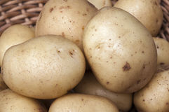 New potatoes Casablanca. Close up of a Casablanca new potatoes in basket Stock Image