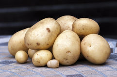 New potatoes Casablanca. Pile of Casablanca new potatoes Royalty Free Stock Images