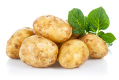 New potatoes with green leaves Royalty Free Stock Photography