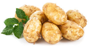 New potatoes with green leaves Stock Image
