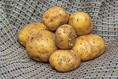 New potatoes Royalty Free Stock Photography