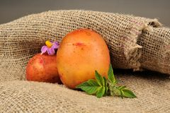 New Potatoes with Leaves and Flower on Sackcloth Royalty Free Stock Photos