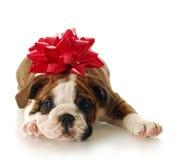 New puppy Royalty Free Stock Photo