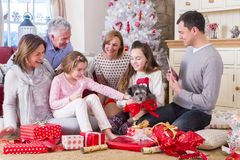 New Puppy at Christmas. Dad takes picture of Three Generation Family at Christmas time. They are all smiling and looking at the new puppy Stock Photography