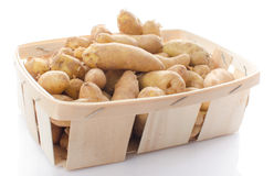 New rattes potatoes in a basket Stock Photo