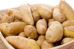 New rattes potatoes in a basket Royalty Free Stock Photography
