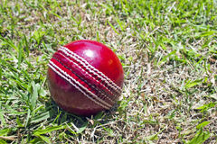 New Red Cricket Ball On Patchy Grass Lawn Stock Images