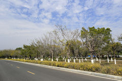 New road of amoy. Green road of the amoy city, china Stock Photos