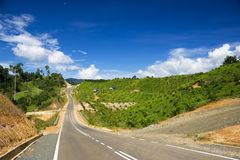 New Road Through Oil Palm Estate Stock Image